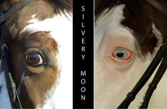 silverymoon